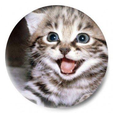 gatito monchi