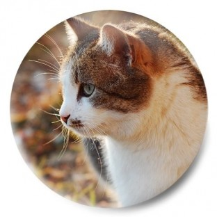 Gato mirando