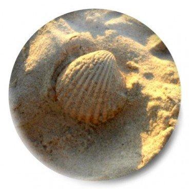 Concha playa