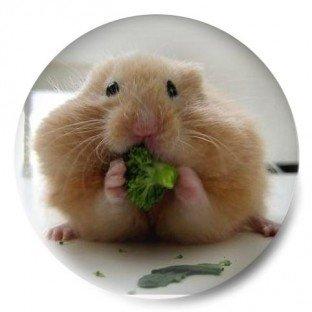 Hamster vegetariano