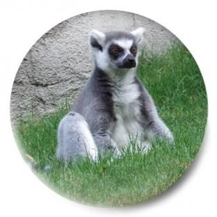 Lémur