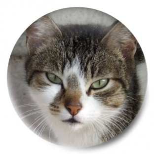 gato gallego
