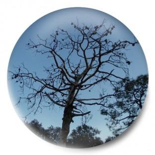 Árbol mirador de Serra