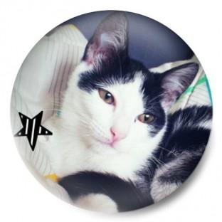 Gato Ziggy con estrella