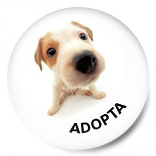 Adopta perrito 1