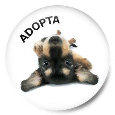 Adopta perrito 2