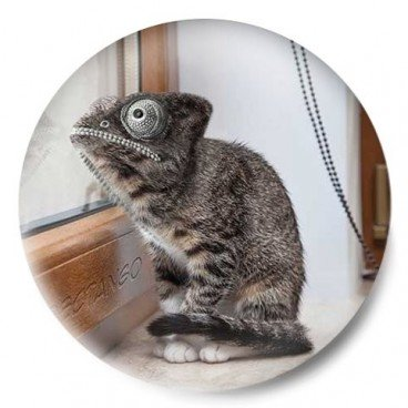 camaleon gato