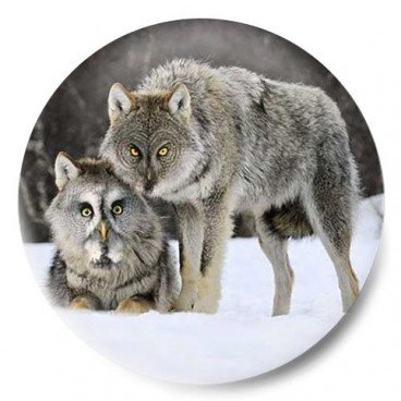 lobo buho
