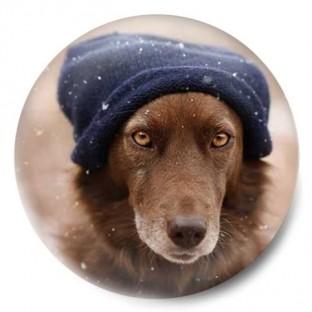 perro invernal