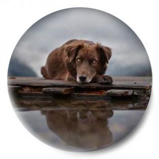 perro lago